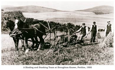 Binding and Stooking, Peebles, 1900