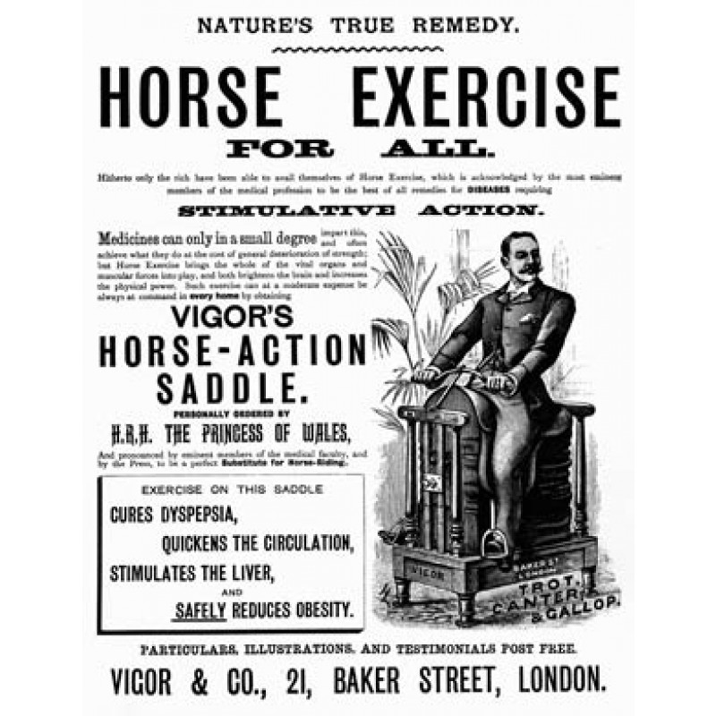Horse Exercise For All