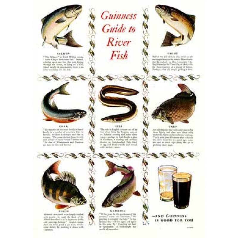Guinness, River Fish