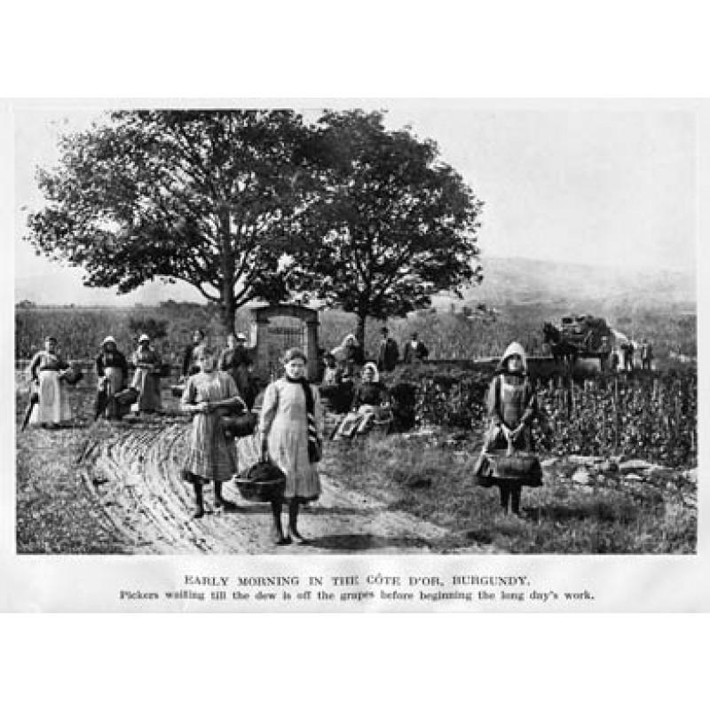 Grape Pickers, Burgundy