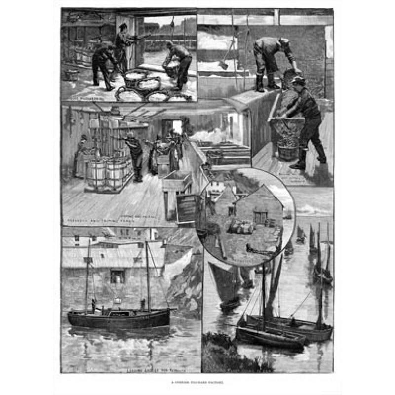 Cornish Pilchard Factory, 1891