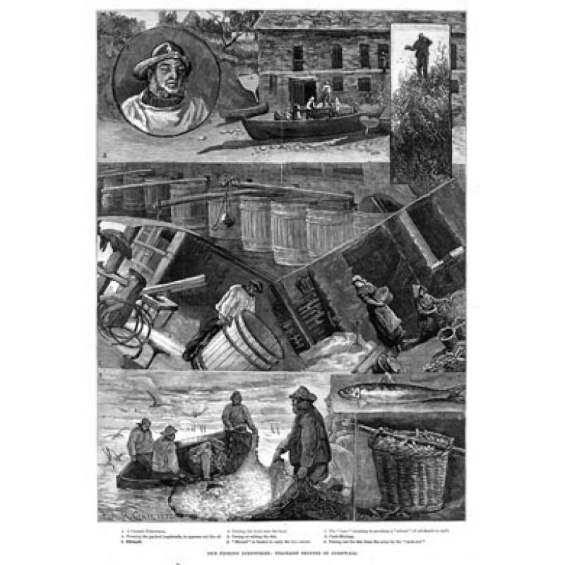 Cornish Pilchard Seining, 1883