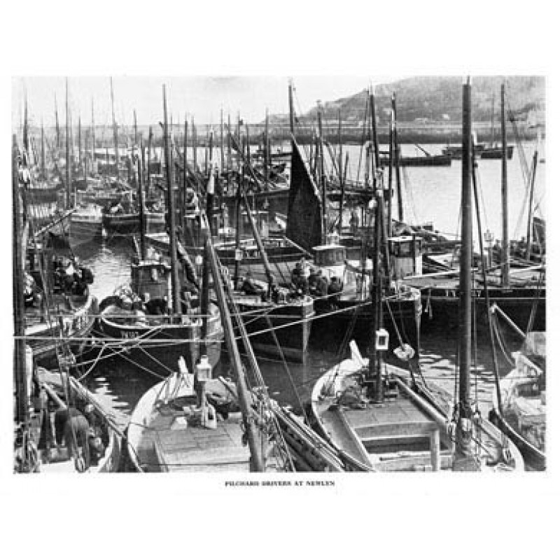 Pilchard Drivers At Newlyn