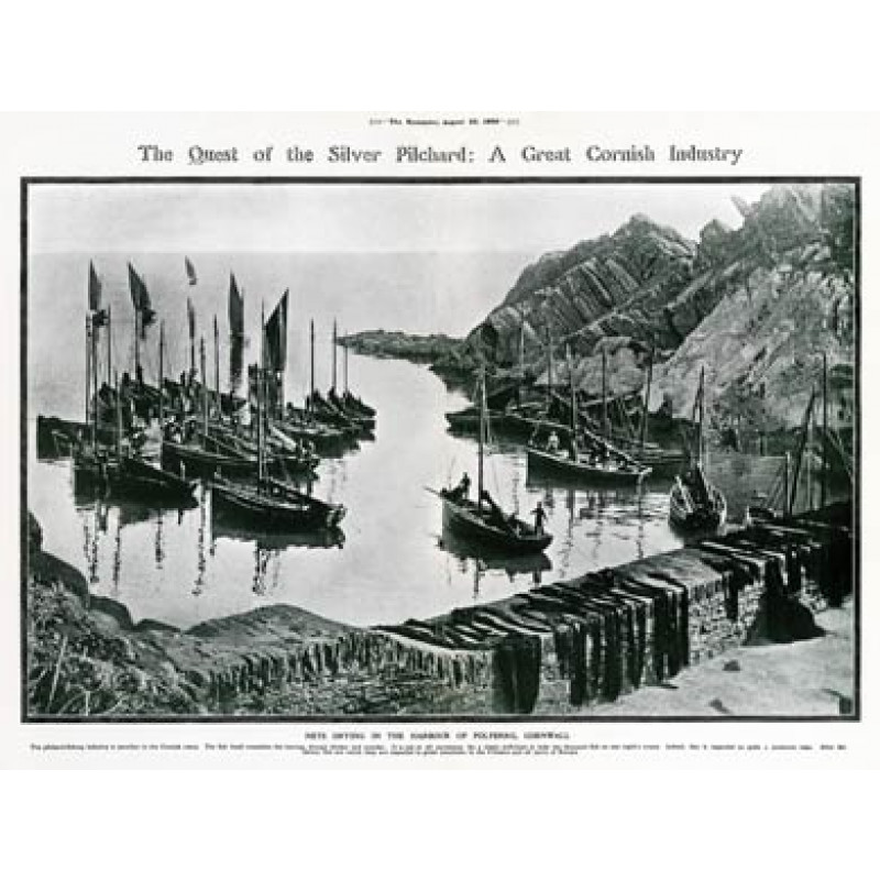 Polperro Pilchard Fleet, 1909