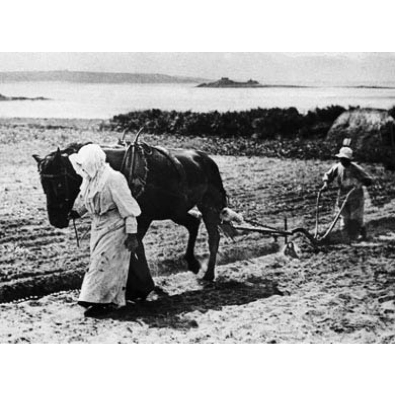 Scilly Isles, Ploughing In Bulbs on St Martins