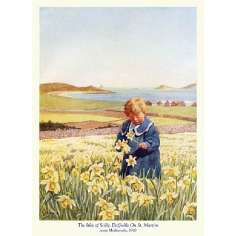 Scilly, Daffodils On St Martins