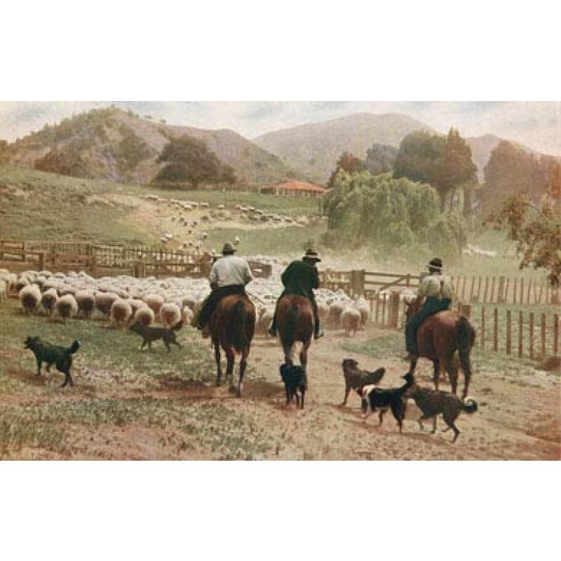 New Zealand Sheep Station