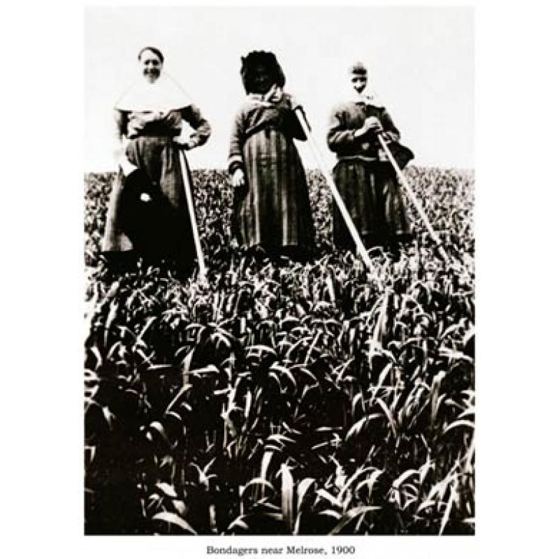 Bondagers Near Melrose, 1900