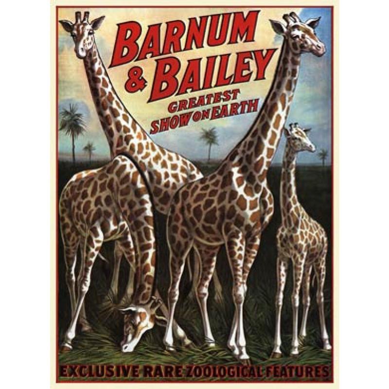 Barnum and Bailey, Giraffes, 1917