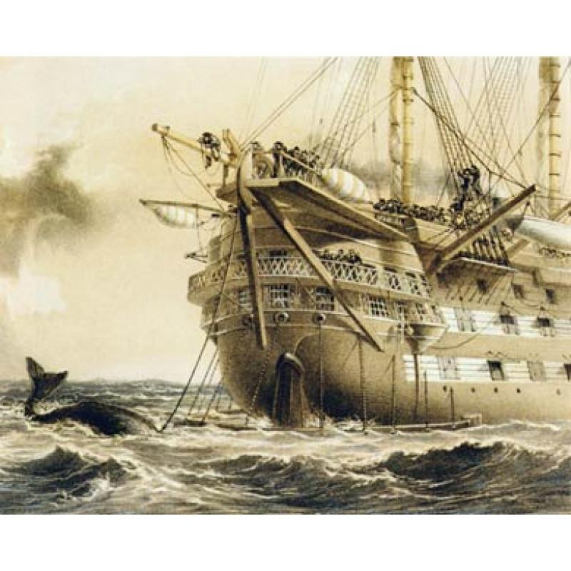 Agamemnon Meets Whale