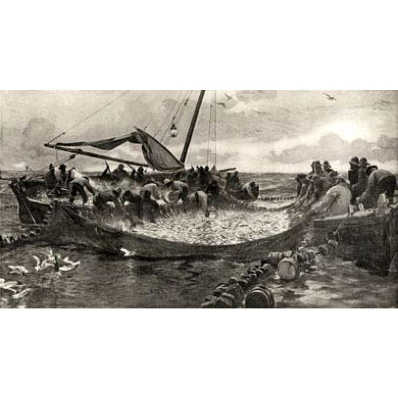 Pilchard Fishing, 1912